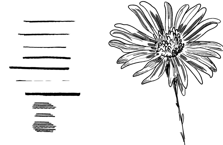 Creare una libreria di pennelli personalizzata con Adobe Illustrator